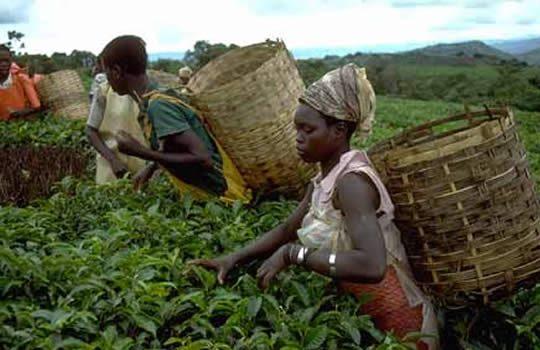 Le Togo , sur le point de louper les 17 milliards d'un projet du FIDA