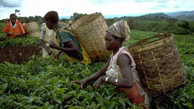 agriculture-togo
