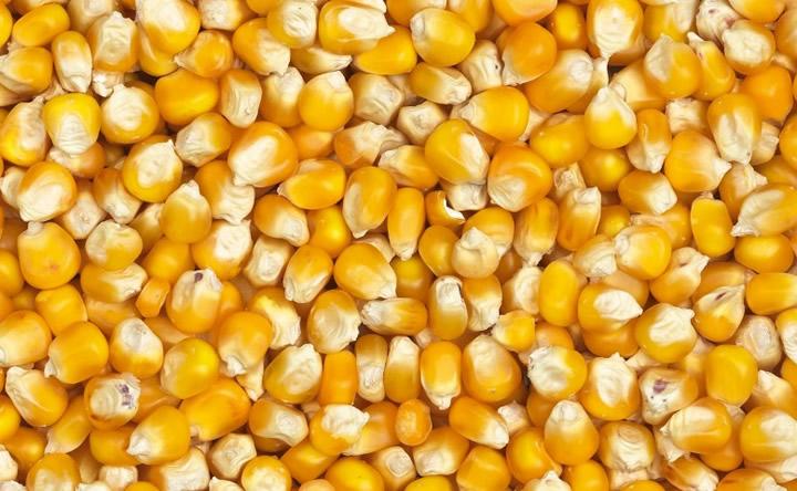 Maïs au Togo