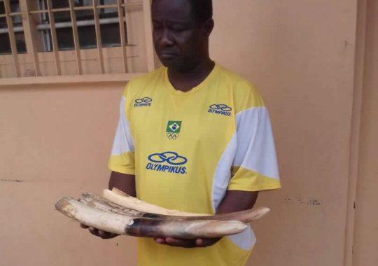 Un ex-marin arrêté en possession de 4 pointes d'ivoire dont un sculpté