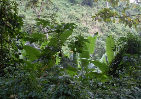 La gestion durable des plantations forestières est une nécessité