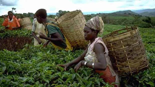 Togo : Le Forum national du conseil Agricole est lancé