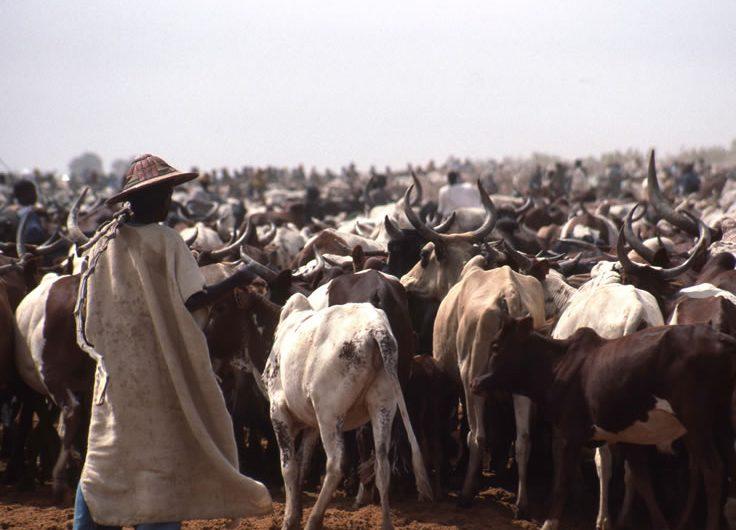 Assassinat de Yawo Apélété par les Peuhls : Une affaire qui fait grand bruit dans l'Agou