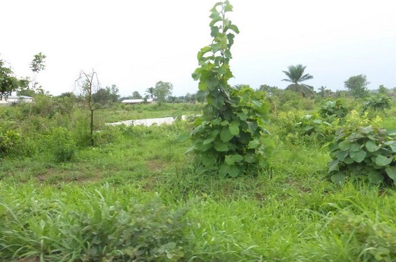Guichet foncier unique : Voici comment obtenir un titre foncier au Togo