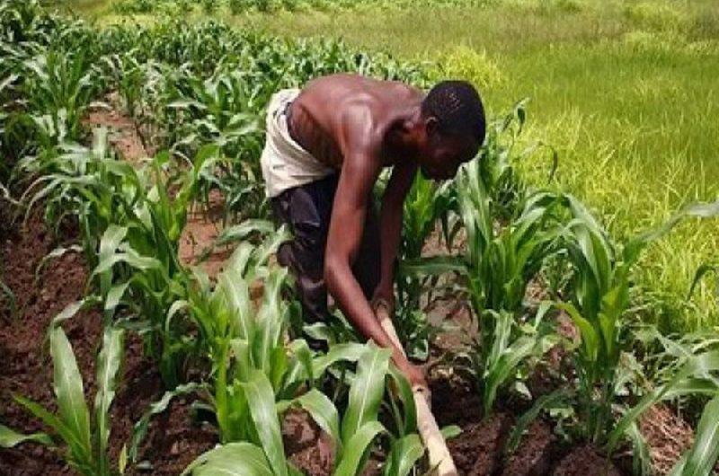 """Togo: """"Yolim"""", un nouveau programme du gouvernement pour financer les agriculteurs."""
