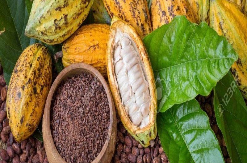 Togo: les exportations agricoles ont généré des recettes de 110,7 milliards FCFA en 2019.