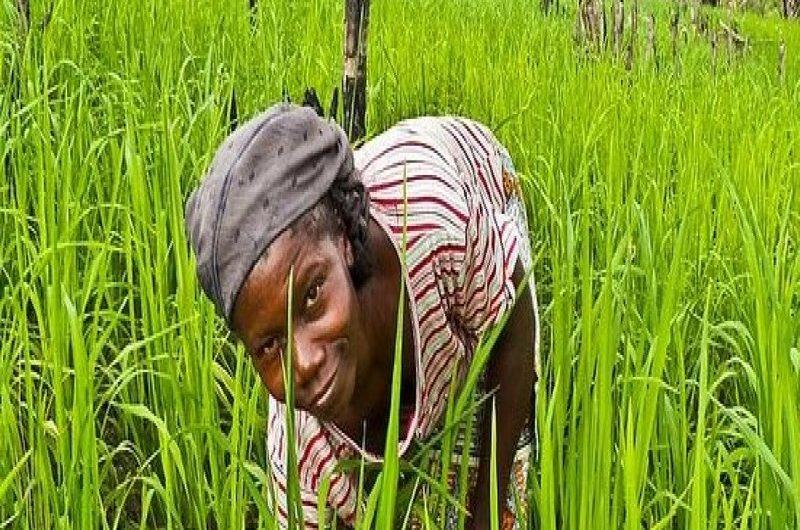 Togo: le prix des engrais maintenu en baisse.