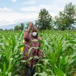 Togo: l'OPEP octroie près de 6 milliards FCFA au secteur agricole.