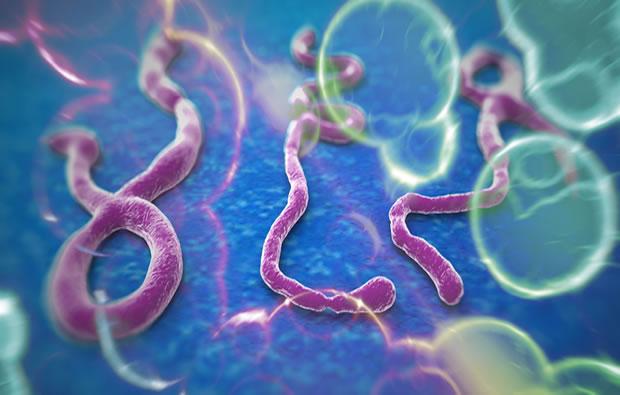 Ebola : l'argent doit être pour l'Afrique