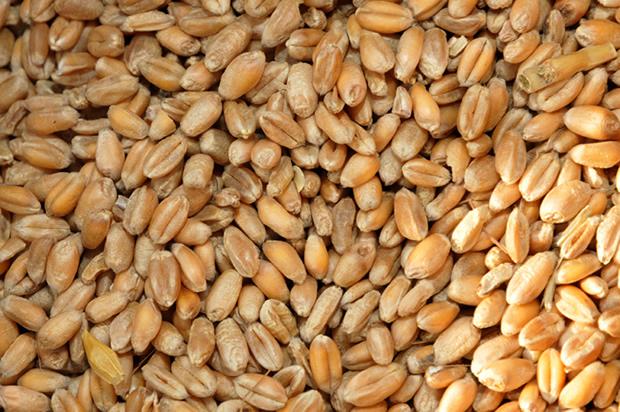 Le Japon fait don de plus de 10.000 tonnes de blé au Togo