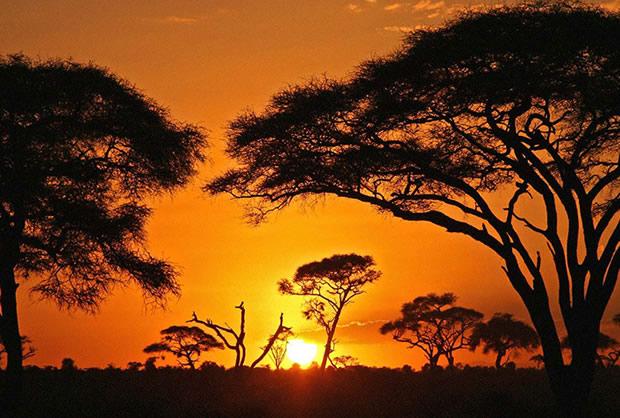 reveil afrique