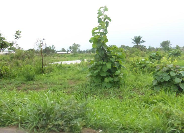 Togo: Le CRAPH redoute un conflit foncier à Abobo