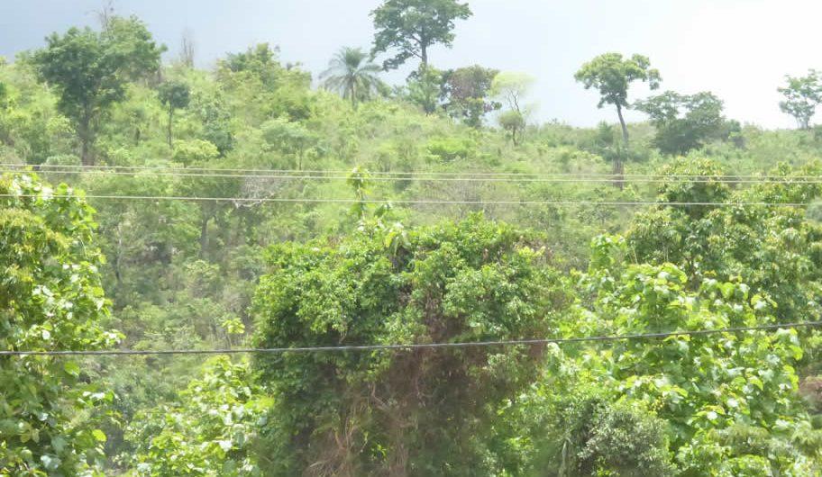 Togo : Les réserves d'État ne le sont que de nom