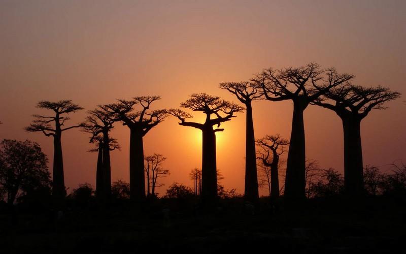 Togo : Proverbes et sagesse tiennent salon !