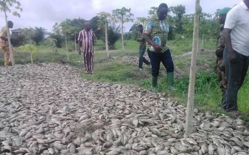 Affaire de poissons empoisonnés au Bénin, alerte des autorités togolaises