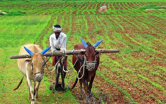 Au Burkina, le ministre Agadazi plaide pour la sécurité alimentaire régionale