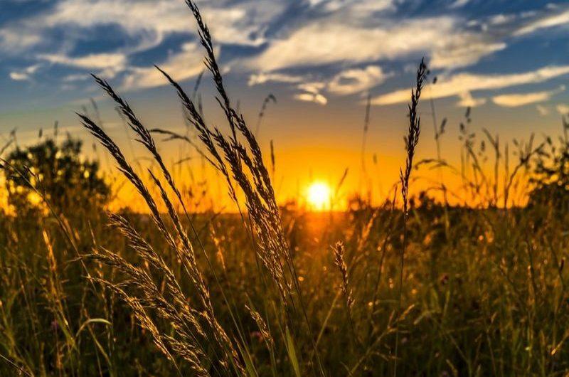 Des semences remis aux cultivateurs pour l'agriculture togolaise