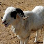 Togo/ CEPD 2018 : Des internautes à  la recherche du mouton perdu