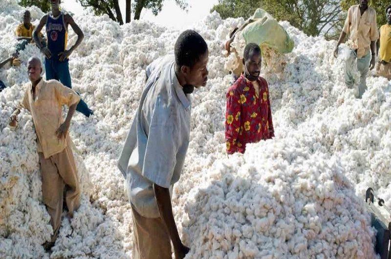Agriculture : Le secteur agricole togolais se porte bien.