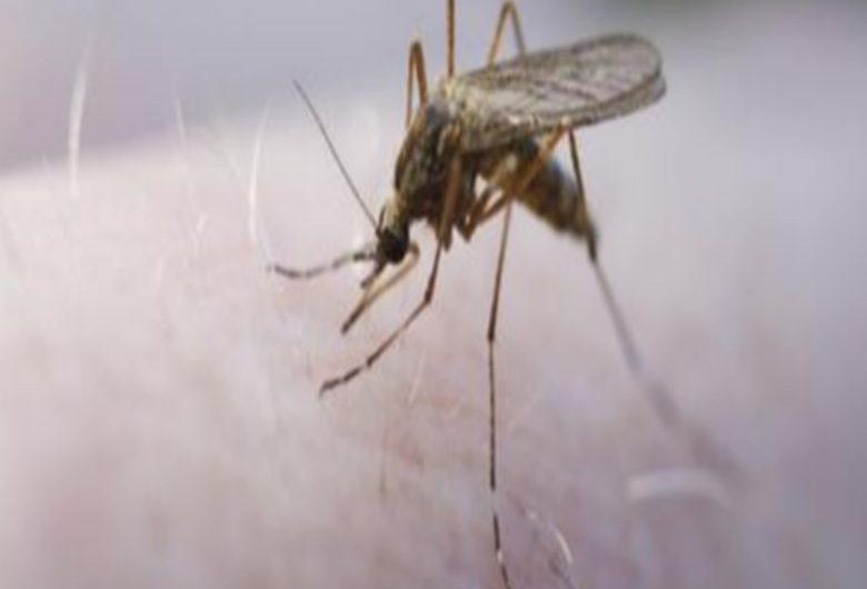 Le traitement du paludisme désormais gratuit au Togo.