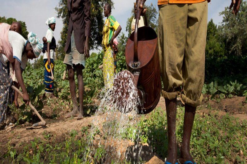 Le secteur agricole bénéficie d'un financement de 10 milliards de FCFA.