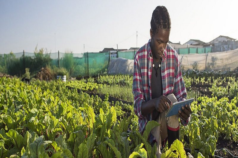 Togo: vers la digitalisation du secteur de l'agriculture.