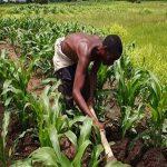 Togo: «Yolim», un nouveau programme du gouvernement pour financer les agriculteurs.