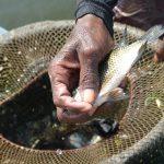 Togo: la pêche sur le lac Nangbeto interdite pour les trois prochains mois.