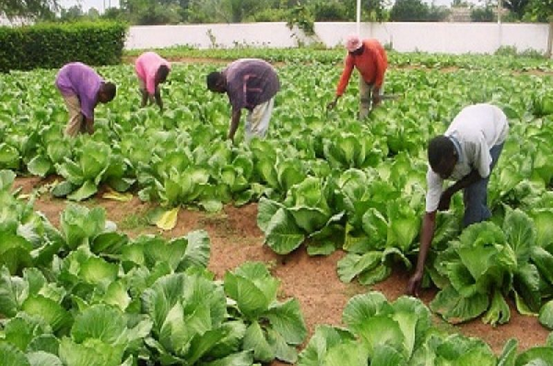 Togo: l'agriculture a créé plus de 200.000 emplois en 2019.
